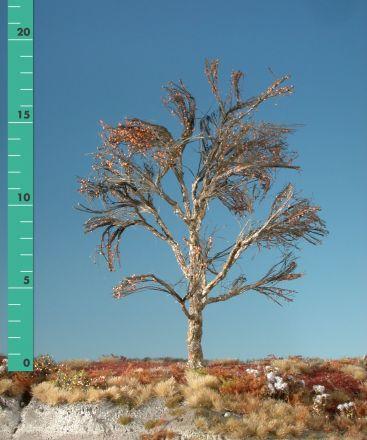 Silhouette Plataan - Kaal - 2 (ca. 15-20cm) - H0 (1:87) - (233-20)