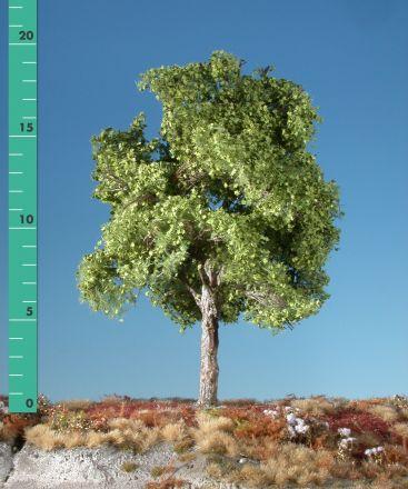 Silhouette Plataan - Lente - 2 (ca. 15-20cm) - H0 (1:87) - (233-21)