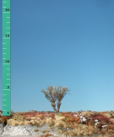 Silhouette Knotwilg - Kaal - 0 (< ca. 8cm) - H0 (1:87) - (241-00)
