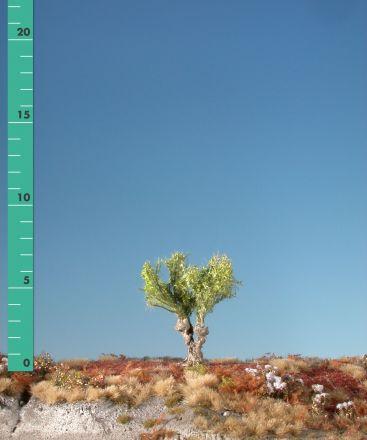 Silhouette Knotwilg - Lente - 0 (< ca. 8cm) - H0 (1:87) - (241-01)