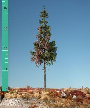 Silhouette Verweerde groene spar hoge stam - Zomer - 3 (ca. 22-29cm) - H0 (1:87) - (274-36)