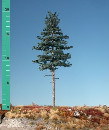 Silhouette Nordic spar hoge stam - Zomer - 2 (ca. 15-20cm) - H0 (1:87) - (277-22)