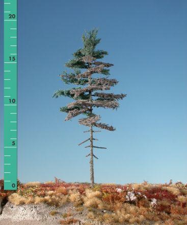Silhouette Verweerde nordic spar hoge stam - Zomer - 3 (ca. 22-29cm) - H0 (1:87) - (277-36)