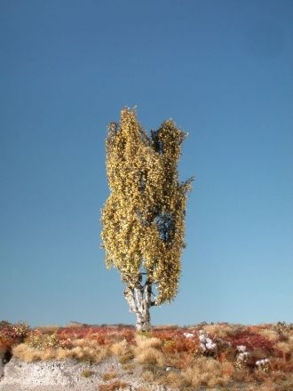 Silhouette Italiaanse populier - Late herfst - ca. 62cm - 0-1 (1:45+) - (313-54)