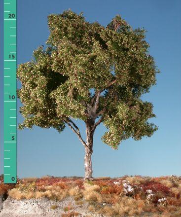 Silhouette Beuk - Vroege herfst - ca. 65cm - 0-1 (1:45+) - (320-53)