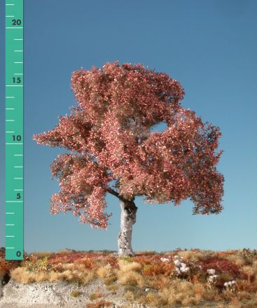 Silhouette Beuk - Late herfst - ca. 65cm - 0-1 (1:45+) - (320-54)