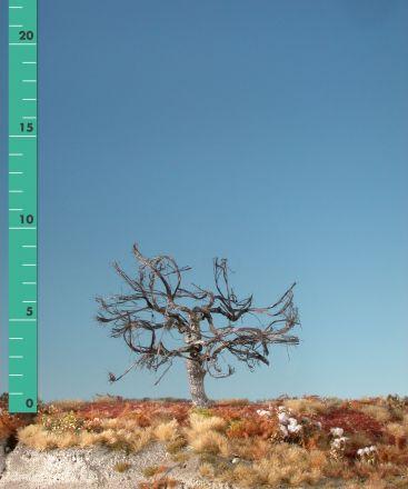 Silhouette Appelboom - Kaal - ca. 19cm - 0-1 (1:45+) - (326-20)