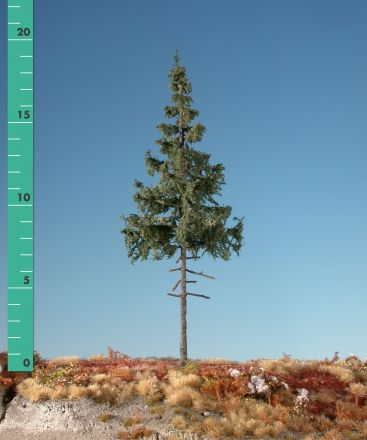 Silhouette Groene spar hoge stam - Zomer - ca. 65cm - 0-1 (1:45+) - (374-52)