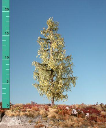 Silhouette Lariks - Vroege herfst - ca. 39cm - 0-1 (1:45+) - (379-43)