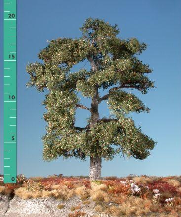 Silhouette Eik - Vroege herfst - ca. 20cm - 0-1 (1:45+) - (380-23)