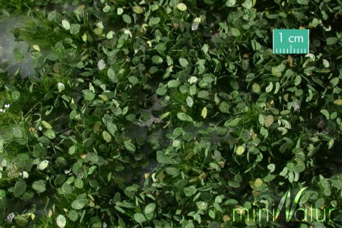 miniNatur Onkruid struiken - Zomer - ca. 4 2x15 cm - 0-1 (1:45+) - (725-32MS)