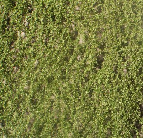 Silhouette Berkenloof - Zomer - ca. 15x4cm - N-Z (1:160-220) - (910-12S)