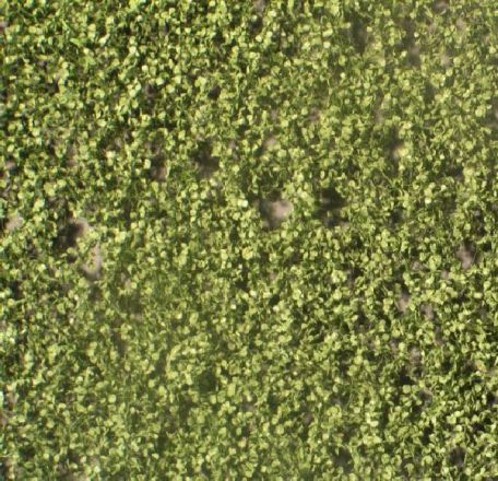 Silhouette Berkenloof - Zomer - ca. 15x4cm - H0 (1:87) - (910-22S)