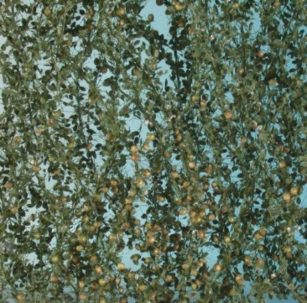 Silhouette Appelboom loof met appels - Zomer - ca. 15x4cm - H0 (1:87) - (926-22S)