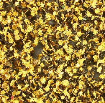 Silhouette Esdoornloof - Late herfst (geel) - ca. 63x50cm - H0 (1:87) - (930-24G)