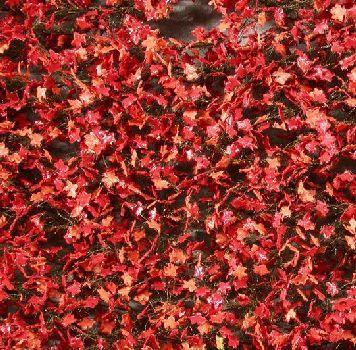 Silhouette Esdoornloof - Late herfst (rood) - ca. 63x50cm - H0 (1:87) - (930-25G)