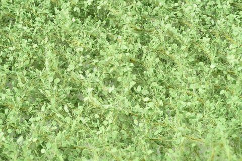 Silhouette Linde - Voorjaar - 3 (< ca. 22 - 29 cm) - H0 (1:87) - (242-31)